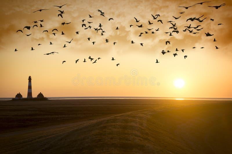 Zmierzch latarnia morska z ptak migrujący obrazy stock