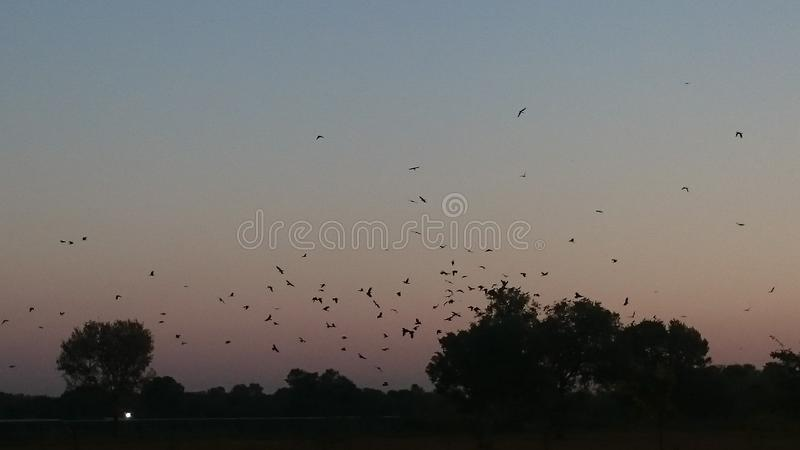 Zmierzch scena z ptakami wraca ich gniazdeczka fotografia stock
