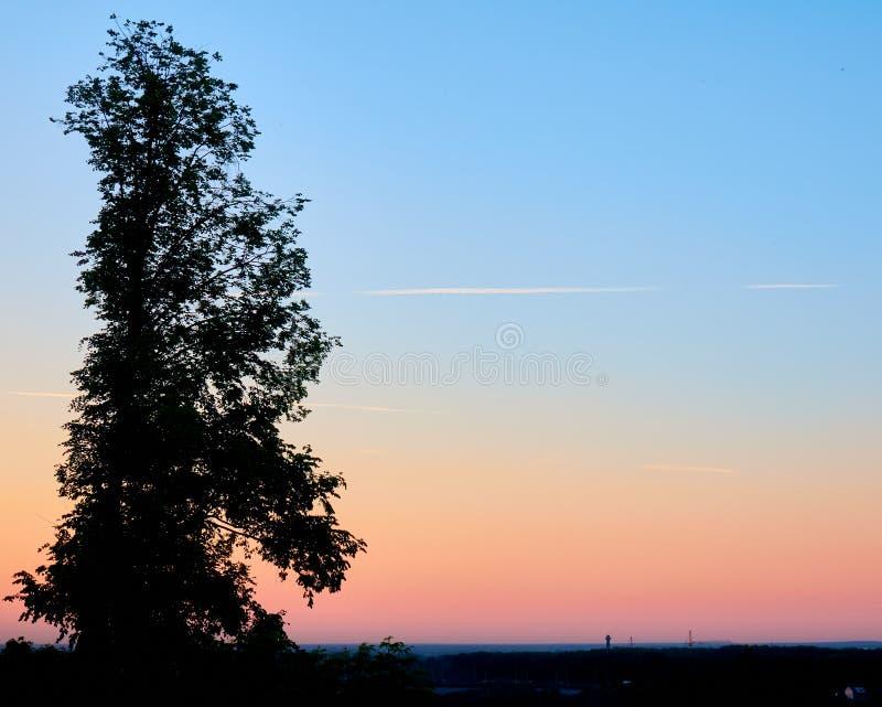 Zmierzch sylwetka duży brzozy drzewo góruje nad miasteczko zdjęcia stock