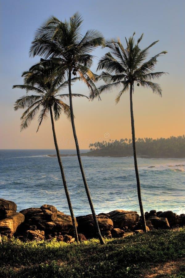 zmierzch tropikalny obrazy stock