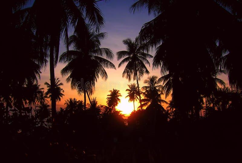 zmierzch tropikalny zdjęcia royalty free