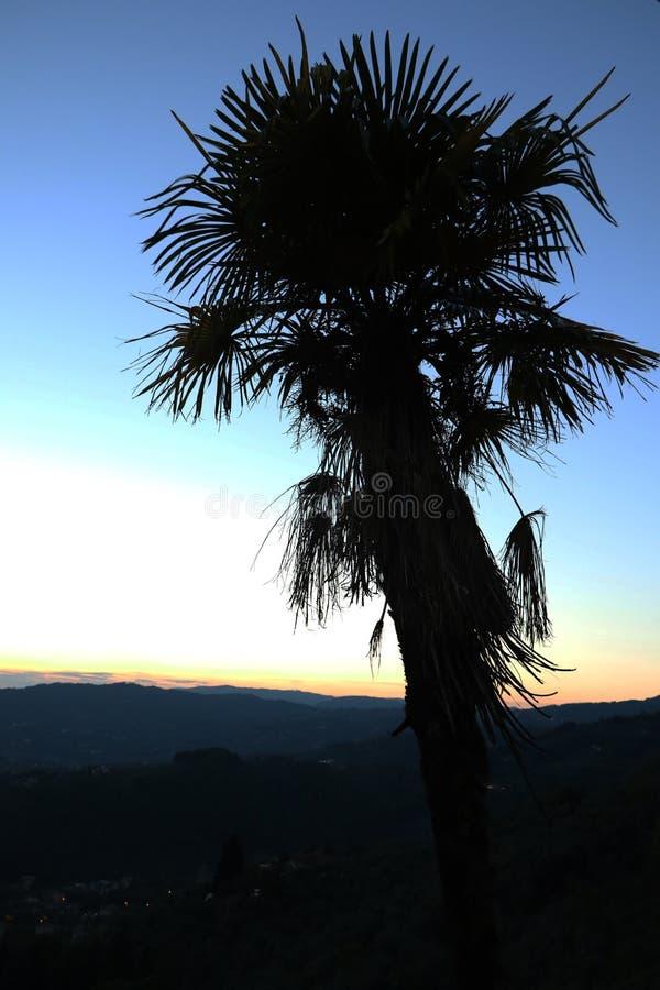 Zmierzch włoszczyzny palma fotografia royalty free
