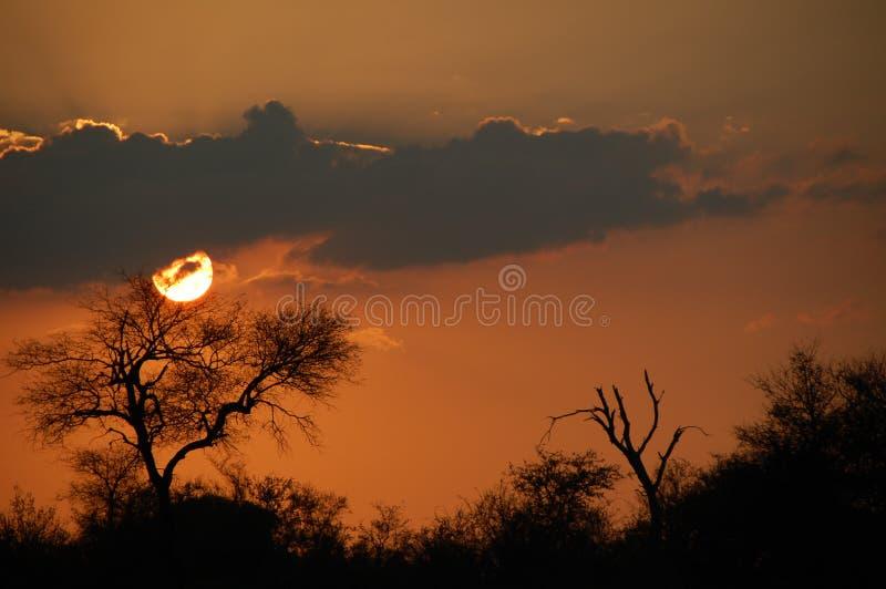 Zmierzch w Afryka zdjęcia royalty free