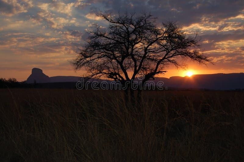 Zmierzch w Afryka fotografia royalty free