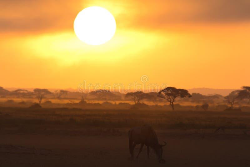 Zmierzch w Amboseli, Kenja obraz royalty free