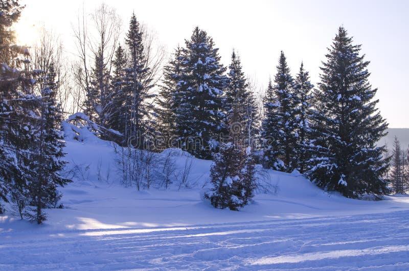 Zmierzch w drewnie w zimie w Rosja Syberia obrazy stock