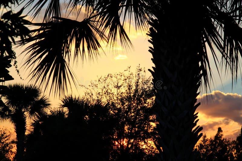 Zmierzch w Ft Pierce, Floryda z sylwetką drzewka palmowe obramia fotografię zdjęcie stock