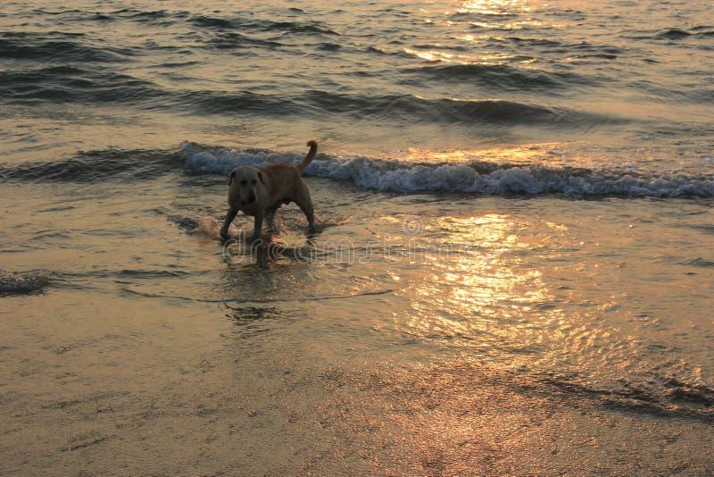 Zmierzch w Goa, ocean indyjski obraz royalty free