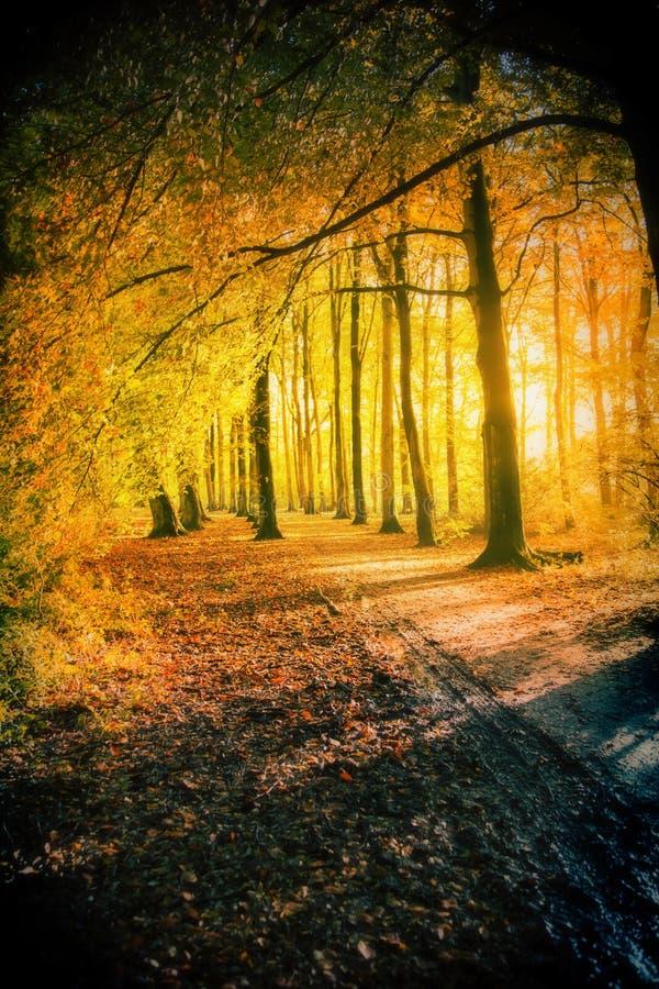Zmierzch w jesień parku zdjęcie royalty free
