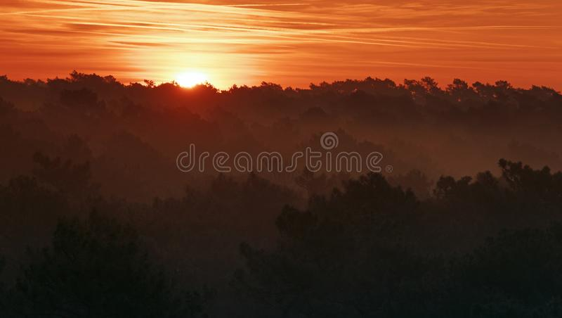 Zmierzch w Landes lasowych zdjęcie royalty free