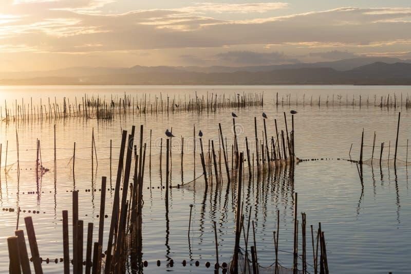 Zmierzch w spokój wodach w naturalnym parku Albufera, Walencja, Hiszpania Magiczni kolory Perfect naturalny tło obrazy royalty free