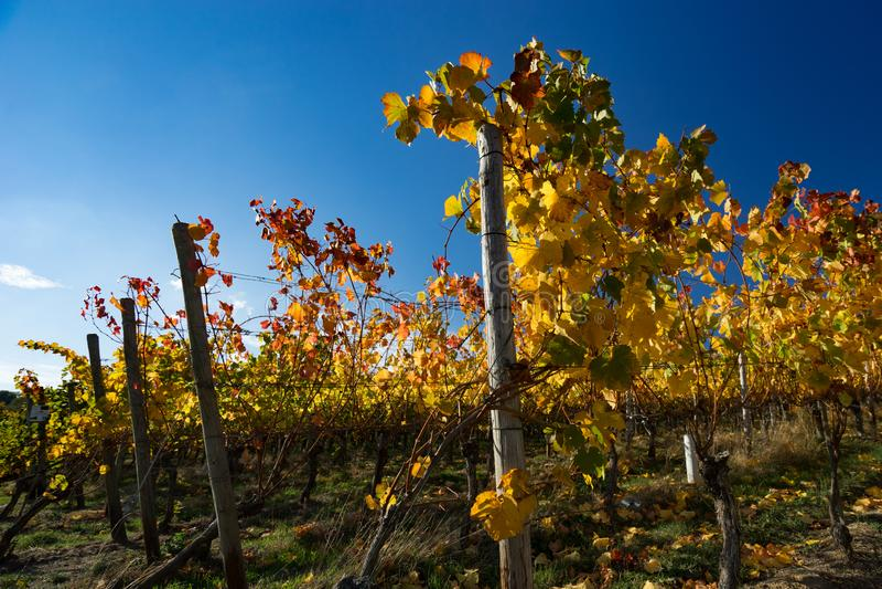 Zmierzch w winnicach Ahrtal w Ahrweiler fotografia royalty free