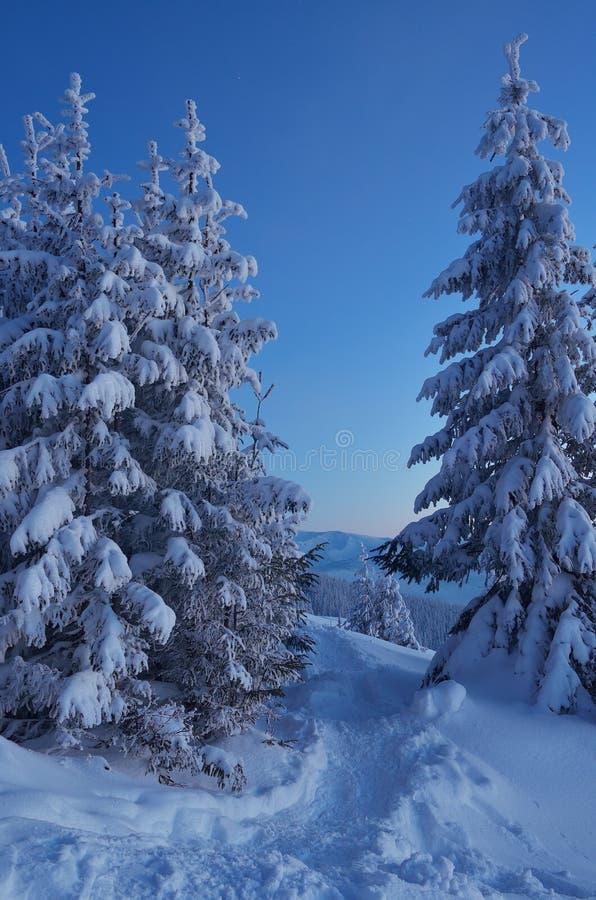 Zmierzch w zima lesie zdjęcia stock