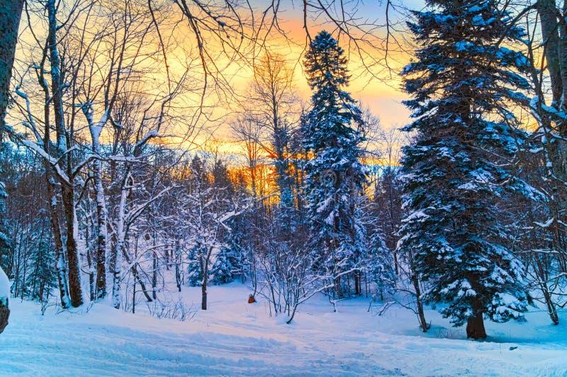 Zmierzch w zima lesie zdjęcie stock