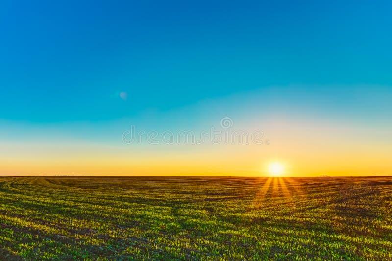 Zmierzch, wschód słońca, słońce nad wiejskiej wsi pszenicznym polem Wiosna fotografia royalty free