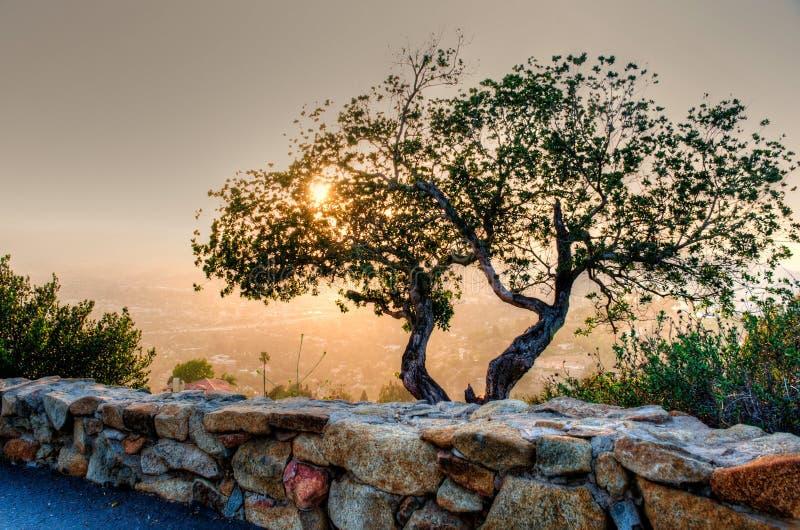 Zmierzch z drzewem w przedpolu zdjęcia royalty free