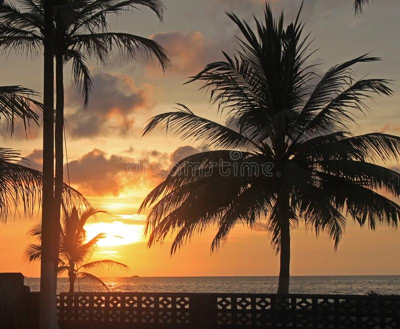 Zmierzch z dwa palmami przy plażą obrazy royalty free