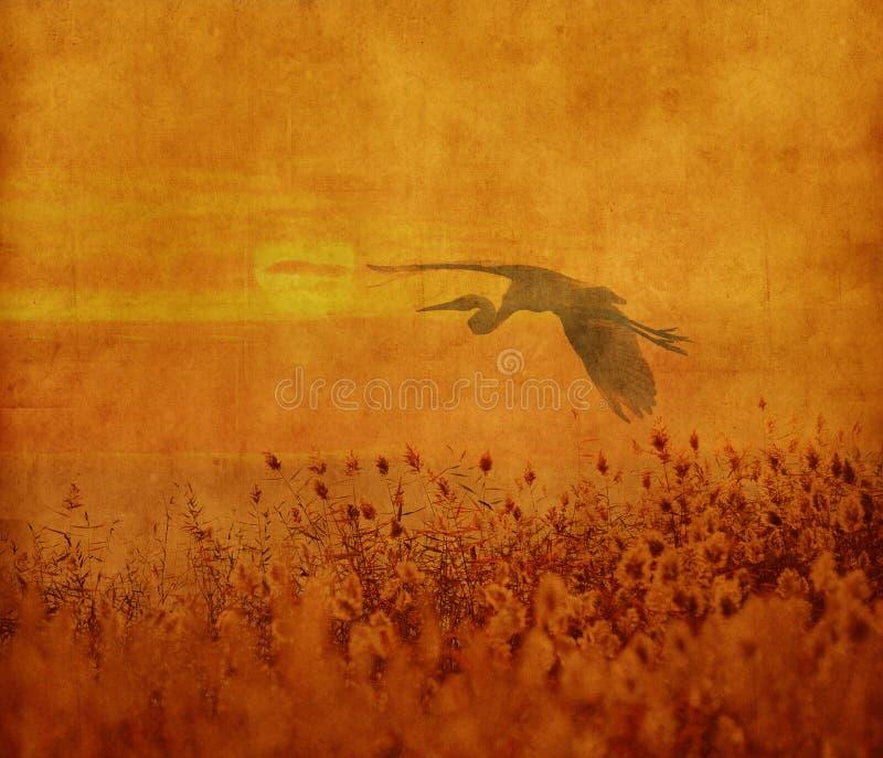 Zmierzch z flighting ptakiem zdjęcie stock