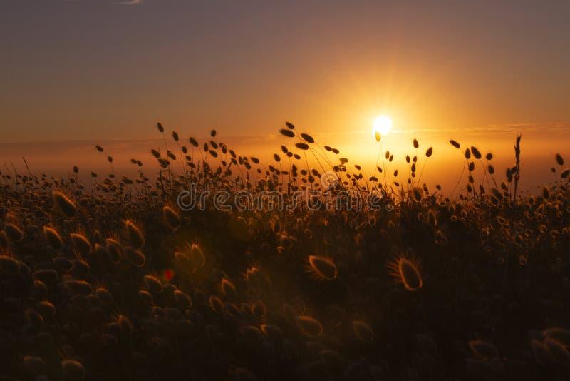 Zmierzch za dziką trawą i mgłą zdjęcie royalty free