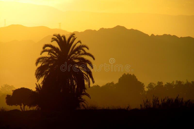 Zmierzchu żółty światło nad góry i drzewko palmowe zdjęcie royalty free