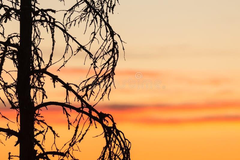 Download Zmierzchu Drzewa I Nieba Sylwetka Obraz Stock - Obraz złożonej z suchy, sceniczny: 53780017