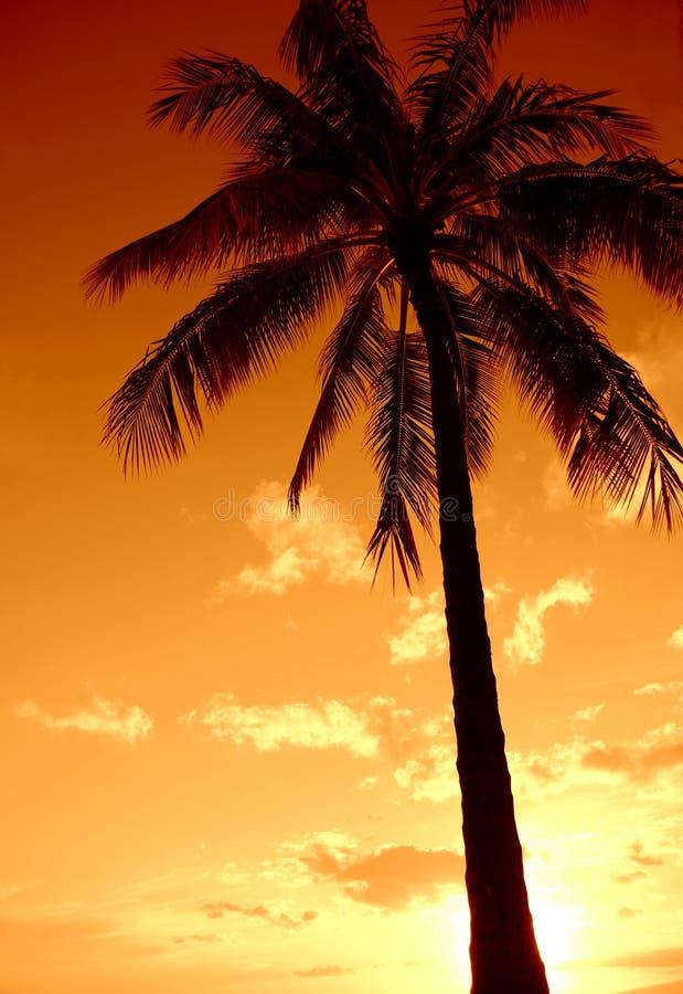 Download Zmierzchu Drzewka Palmowego Raj Obraz Stock - Obraz: 26617475