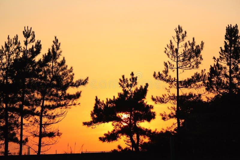 Zmierzchu drzewo fotografia royalty free