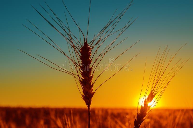 Download Zmierzchu i żniwa pole obraz stock. Obraz złożonej z agronomia - 28952169