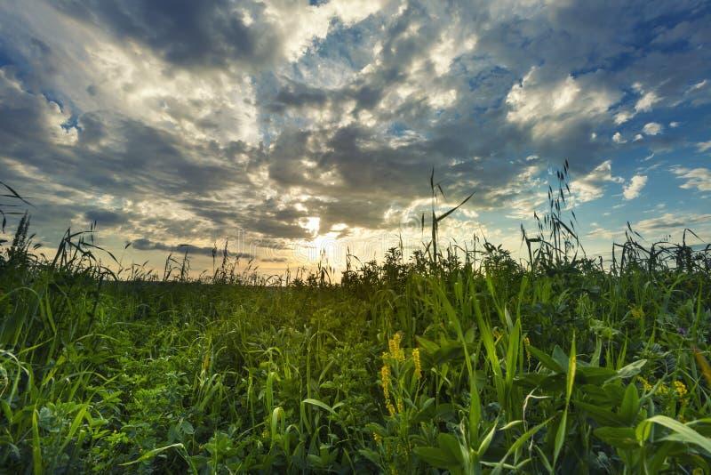 Zmierzchu krajobraz z niebem i chmurami, zielonej trawy wiosna szeroki obraz stock
