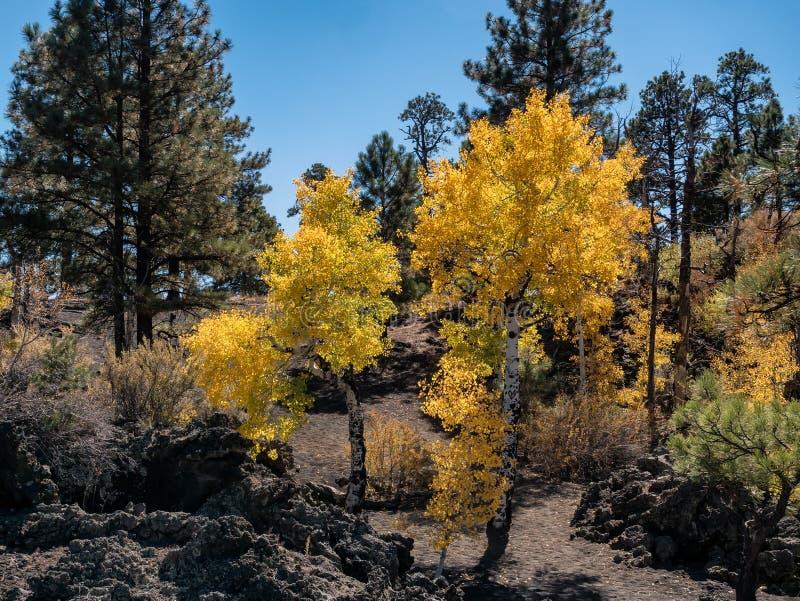 Zmierzchu krateru lawowego przepływu jesieni liście, flagstenga Arizona zdjęcia stock