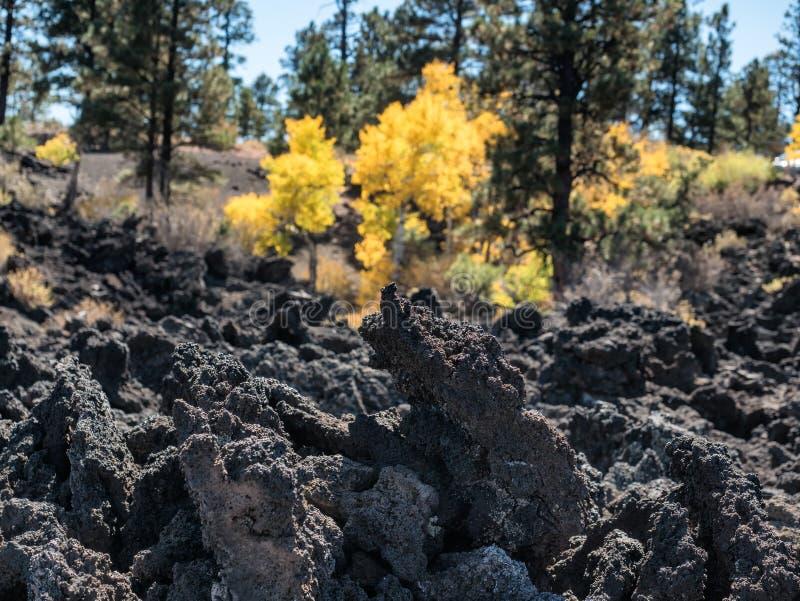 Zmierzchu krateru lawowego przepływu jesieni liście, flagstenga Arizona obraz stock