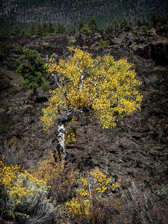 Zmierzchu krateru lawowego przepływu jesieni liście, flagstenga Arizona zdjęcie royalty free