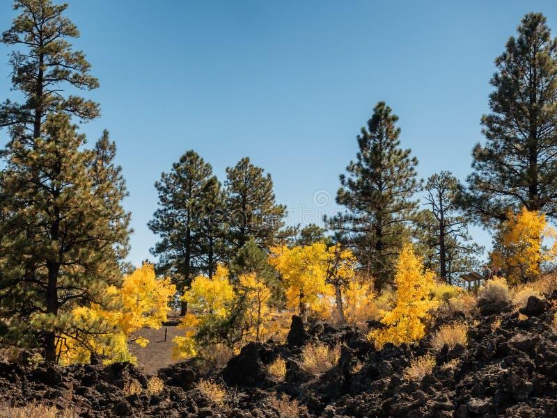 Zmierzchu krateru lawowego przepływu jesieni liście, flagstenga Arizona fotografia royalty free