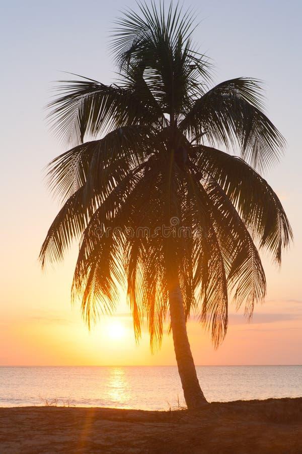 zmierzchu palmowy drzewo obraz royalty free