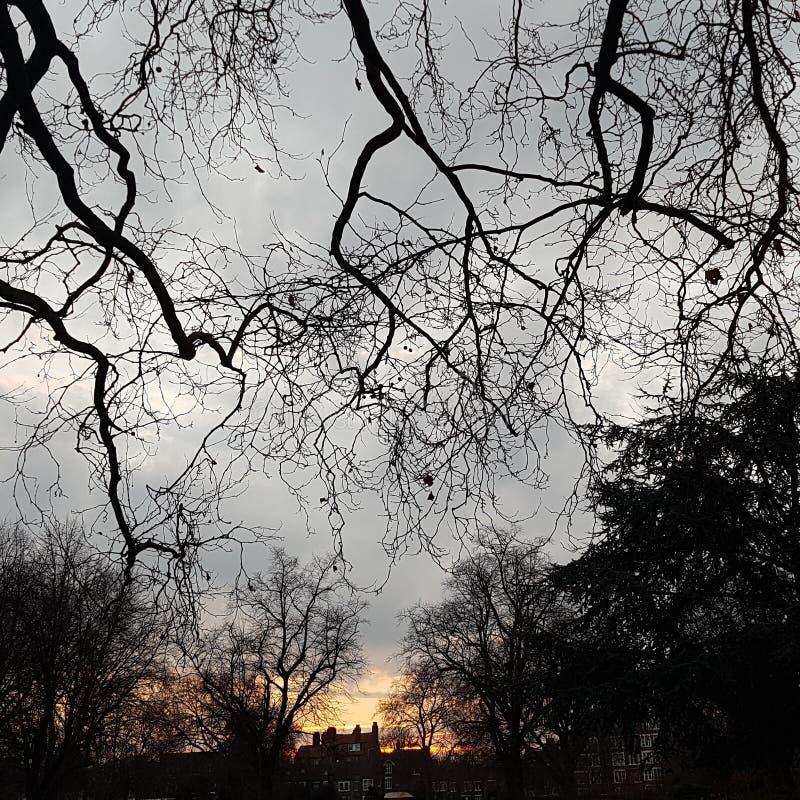 Zmierzchu piękna parka drzew naturalna zima obrazy royalty free