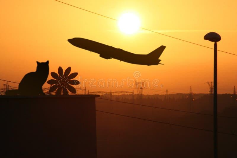 Zmierzchu przemysłowy Słonecznik fotografia stock