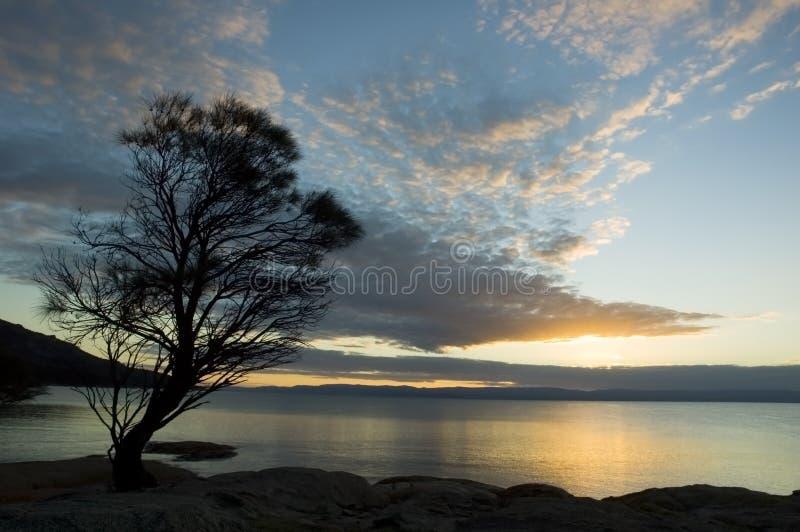 zmierzchu samotny drzewo fotografia royalty free