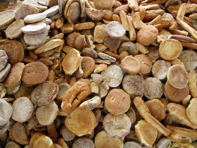 Zmizerowany suchy chleb fotografia stock