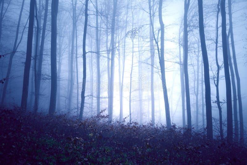 Zmrok - błękitny barwiony mgłowy las obraz stock