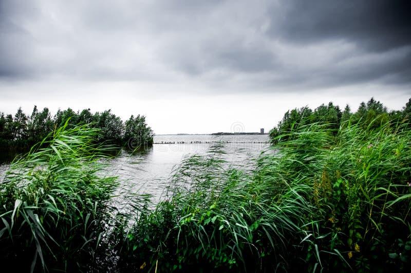Zmrok chmurnieje na jeziorze z zielonymi trzcinami i drzewami fotografia royalty free
