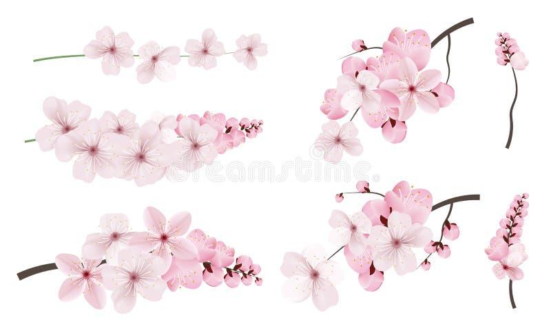 Zmrok i światło - różowi Sakura kwiaty royalty ilustracja