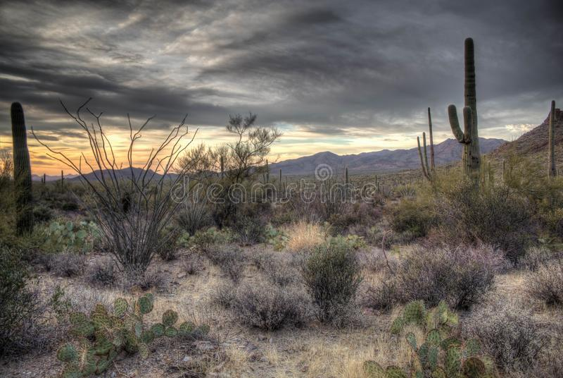 Zmrok, markotny zmierzch w Sonoran pustyni zdjęcie stock