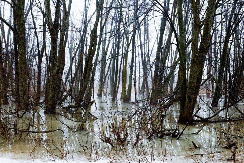 Zmrok marznący zimy bagno zdjęcia royalty free