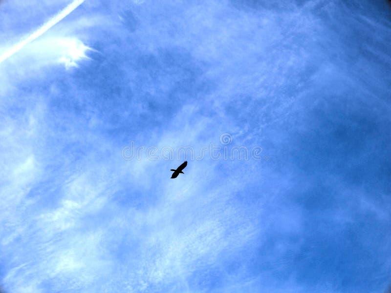 Zmrok - niebieskie niebo z czystymi biel chmurami i ptasią sylwetką, doskonalić dla strona internetowa sztandarów i tła, fotografia royalty free
