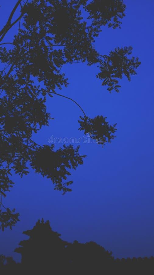 zmrok nightscape Nightscene zakazane miasto Gugong Drzewo liść Liście Cucoloris nakreślenie zdjęcia royalty free