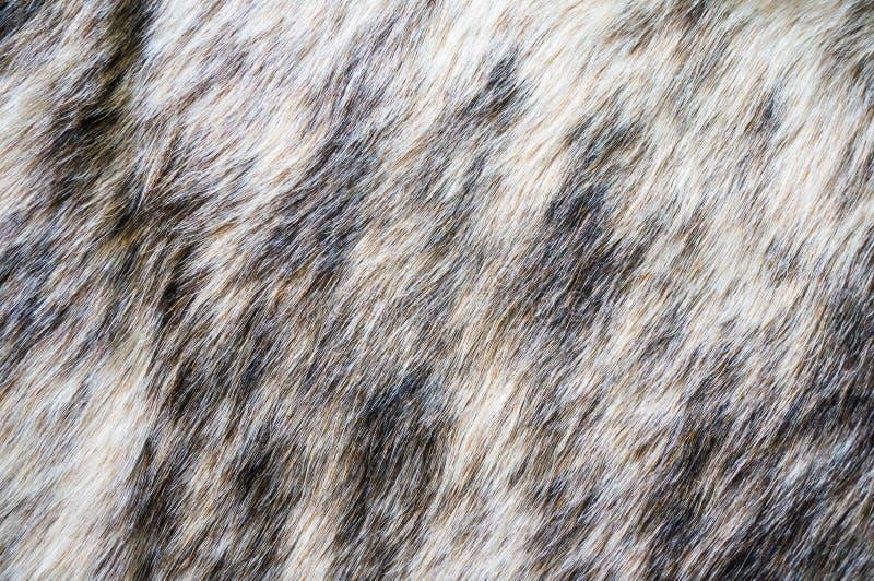 Futerkowej tekstury Wyderkowa futerkowa alfa obraz royalty free