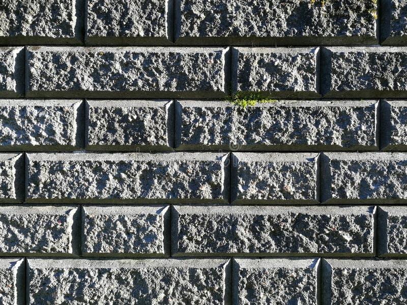 Zmrok - szary ściana z cegieł z szorstką strukturą, przerastającą z zieloną mech teksturą, tło zdjęcie royalty free