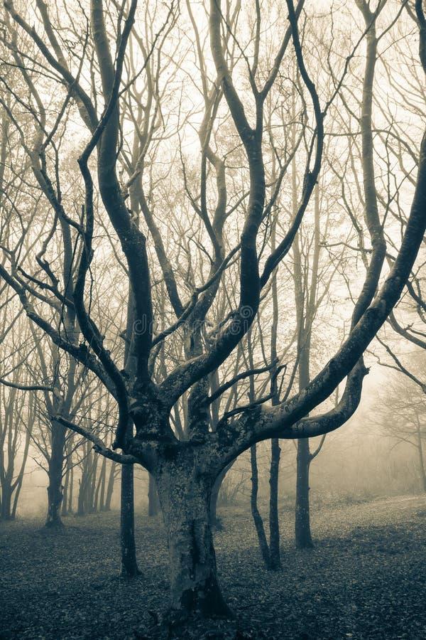 Zmroku zarobaczony las duchami fotografia royalty free