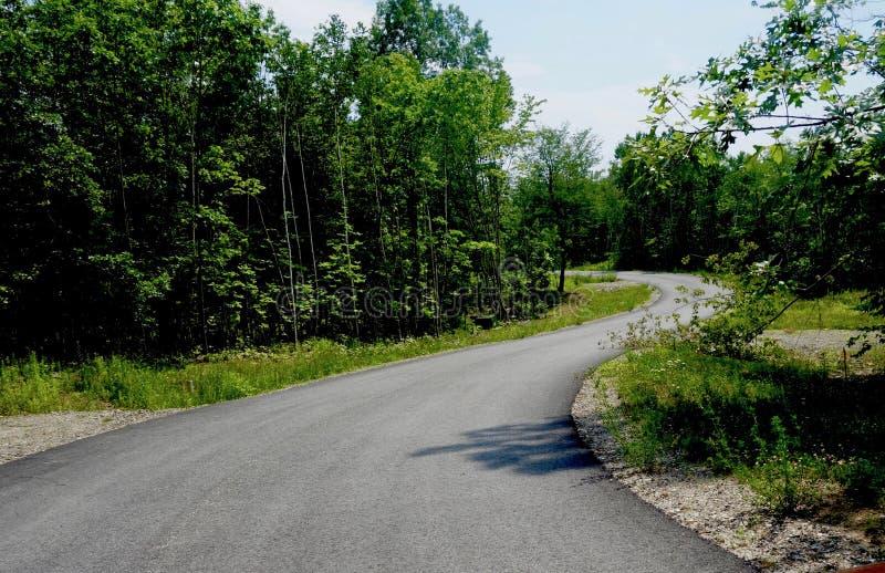 Zmysłowa wijąca droga przez drzew w lecie, podróż obraz royalty free