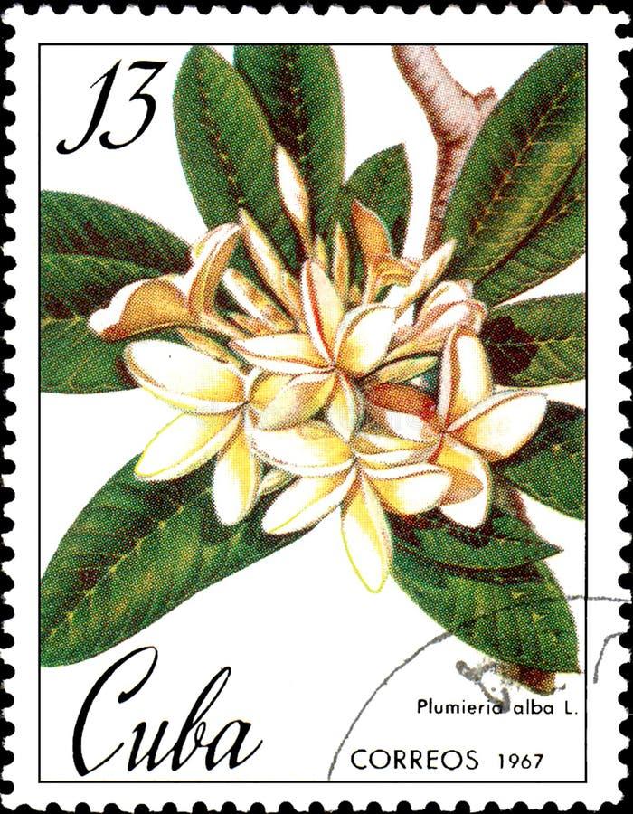 Znaczek drukujący w Kuba pokazuje wizerunek Plumieria albumy około 1967, royalty ilustracja